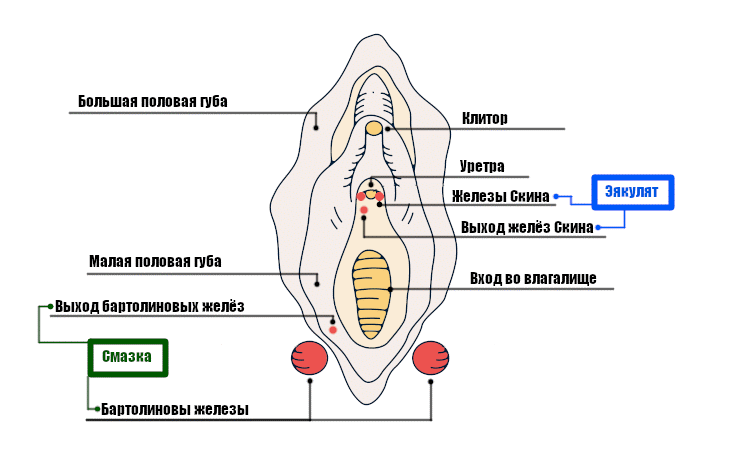 Эякулят