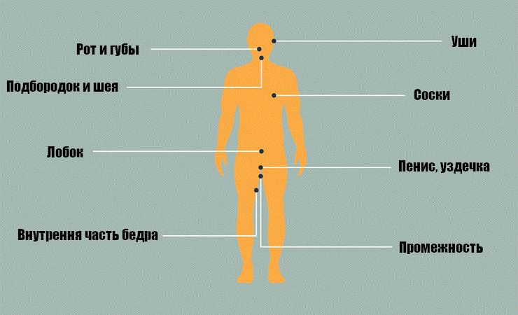 карта эрогенных зон у мужчин