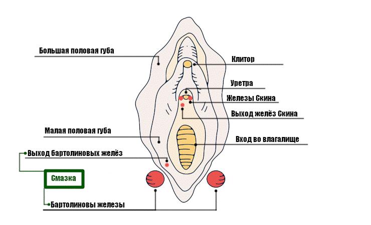 Смазка